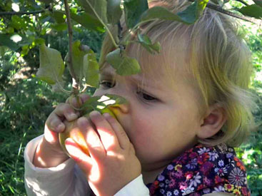 Lauren loves our apples
